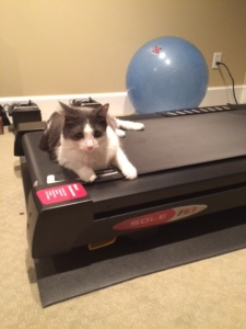How we feel about treadmill runs.